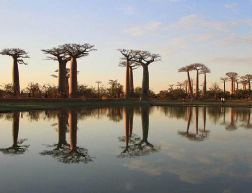 تور ماداگاسکار