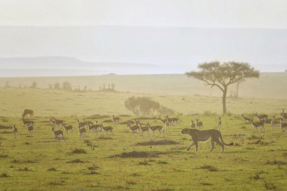سفرنامه-کنیا