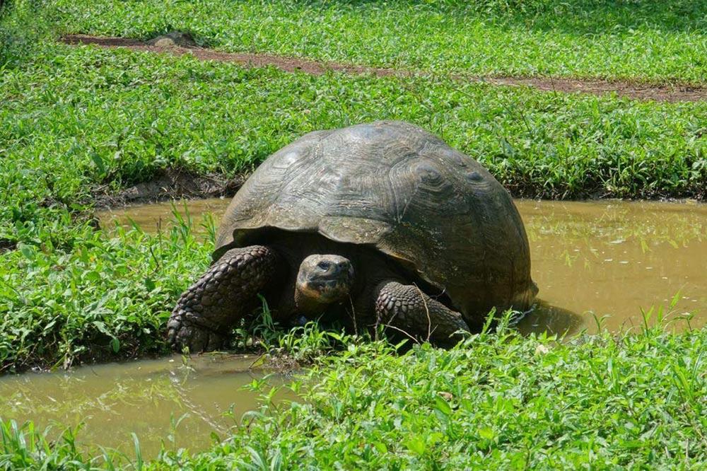 لاکپشت غول پیکر