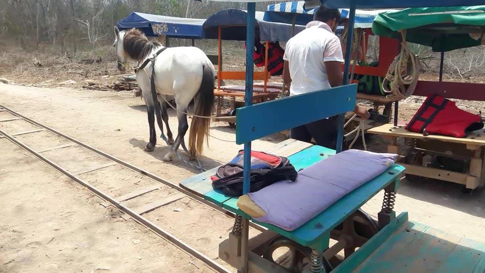 گاری سواری در مکزیک