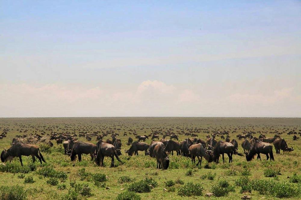 مهاجرت بزرگ حیات وحش آفریقا