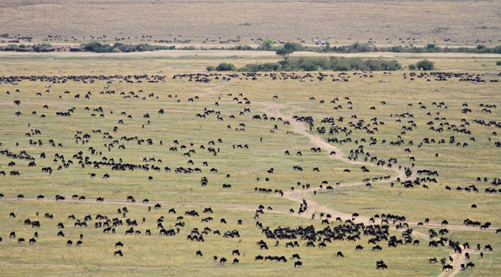 مهاجرت بزرگ حیات وحش کنیا