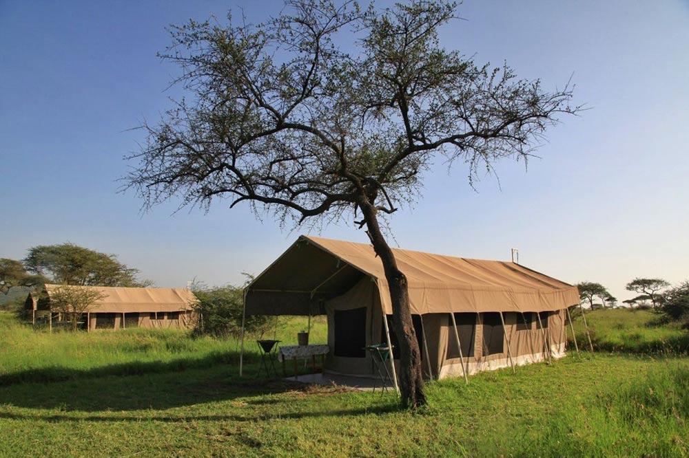 کمپ در سرنگتی