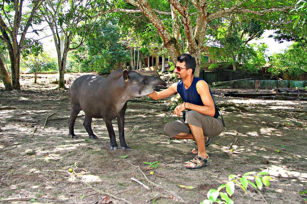 حیات وحش آمازون - تاپیر