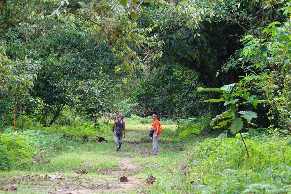 پیاده روی در جنگل استوایی