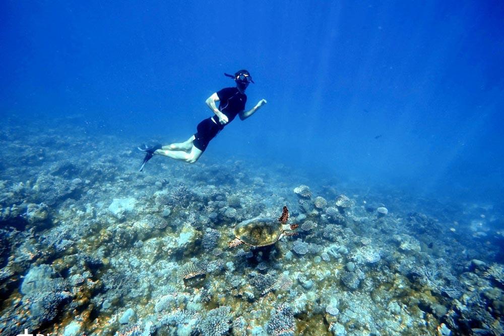لاکپشت دریایی سفرنامه مالدیو