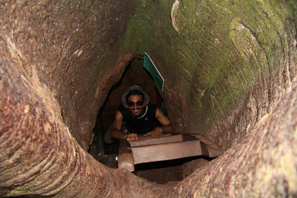 اقامت داخل تنه درخت