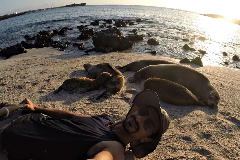 شیرهای دریایی - سفرنامه گالاپاگوس