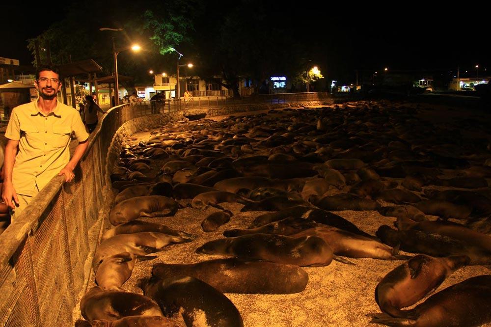 ساحل شیر دریایی - گالاپاگوس
