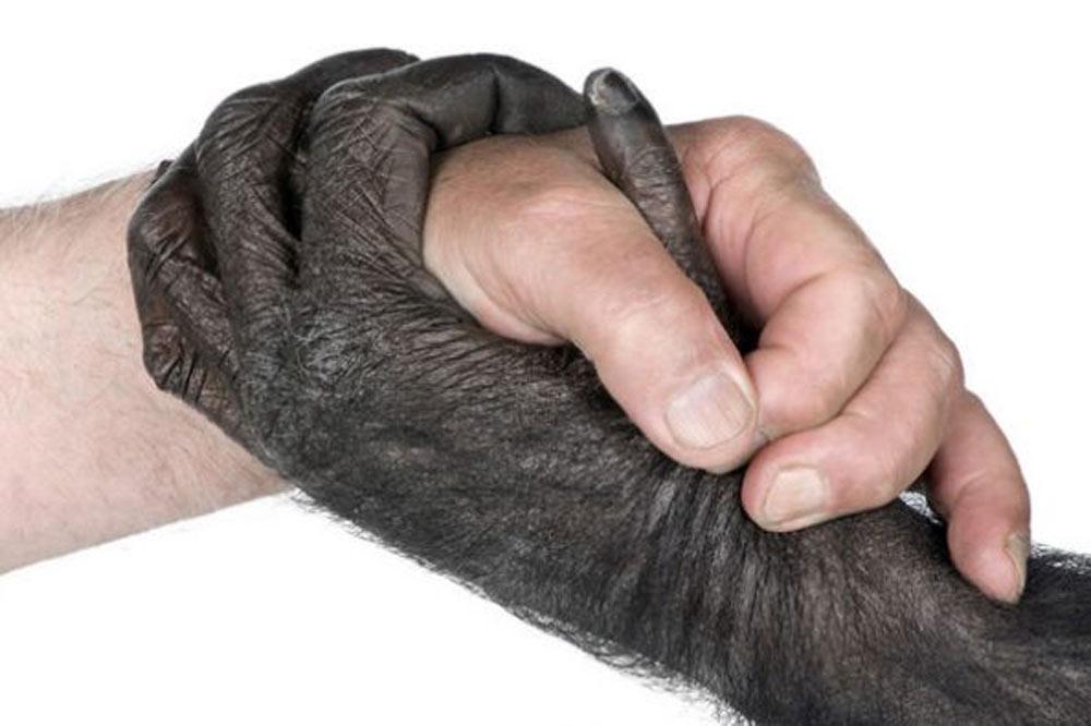انتقال خون شامپانزه به انسان
