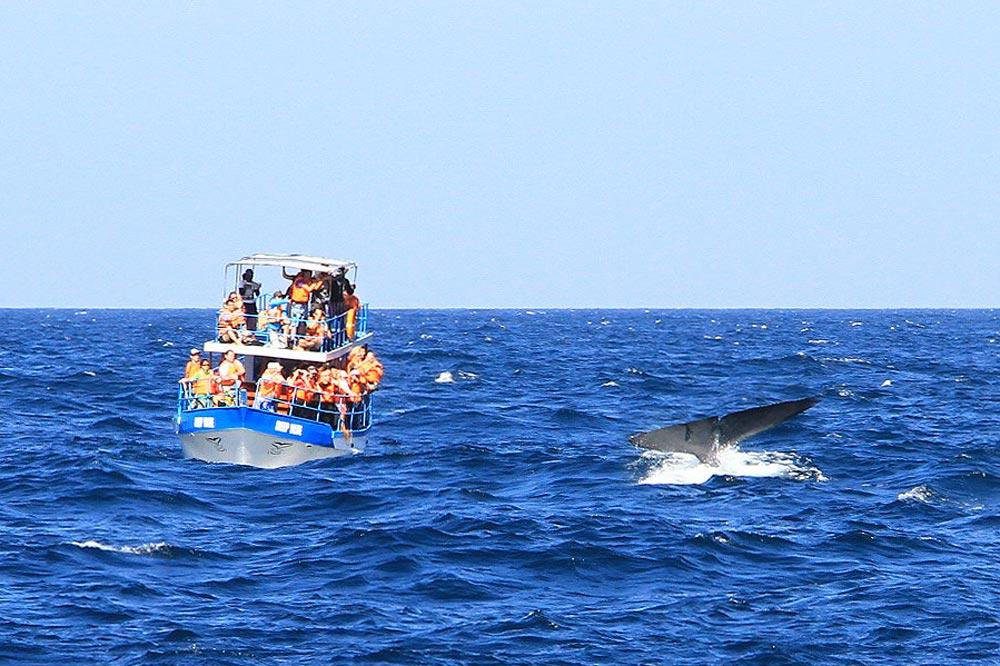 مشاهده نهنگ در دریا
