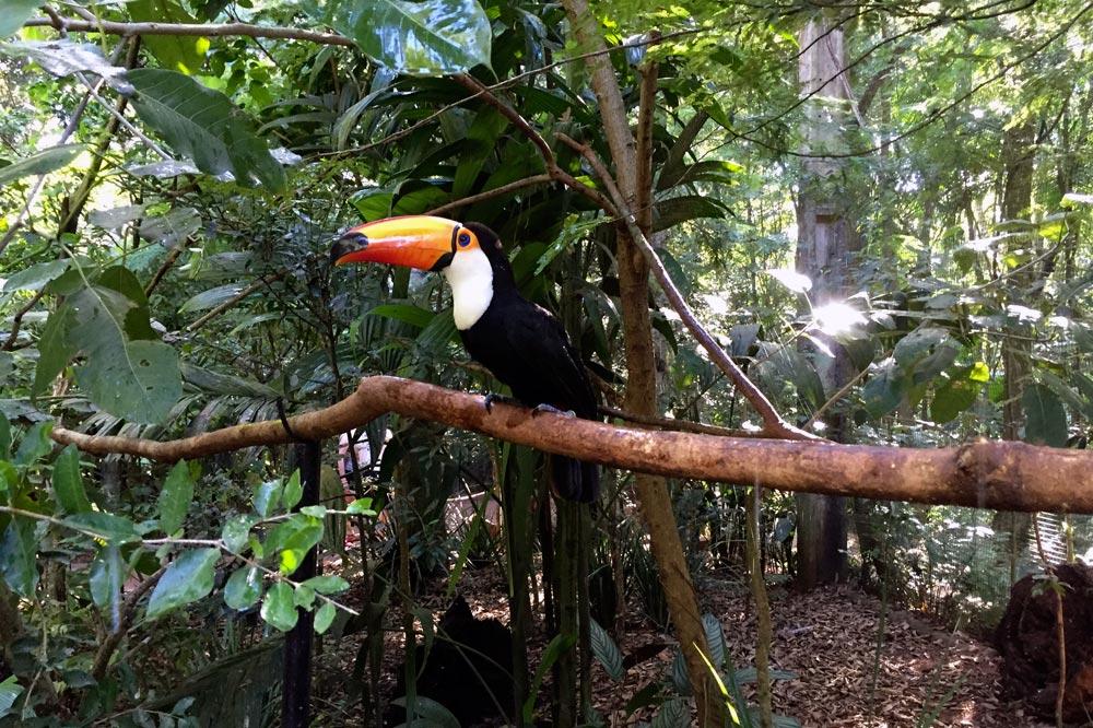 باغ پرندگان برزیل