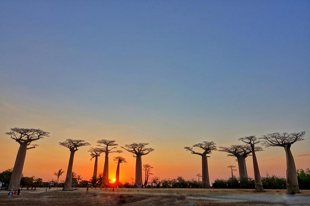 درخت باوباب - سفرنامه ماداگاسکار