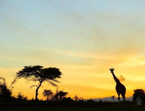 تور سافاری کنیا