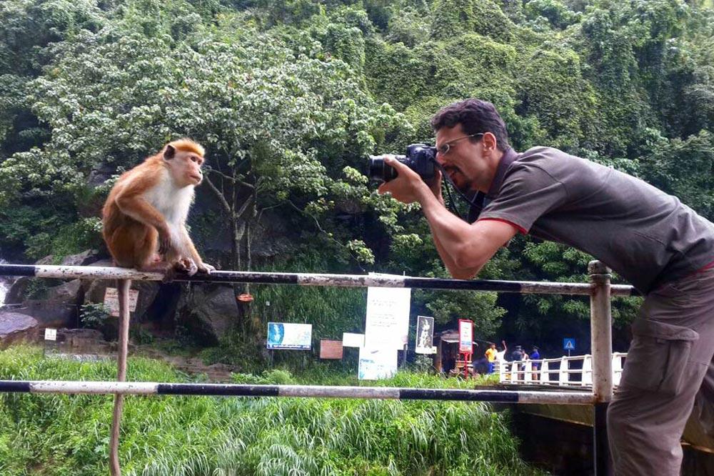 عکاسی از میمون