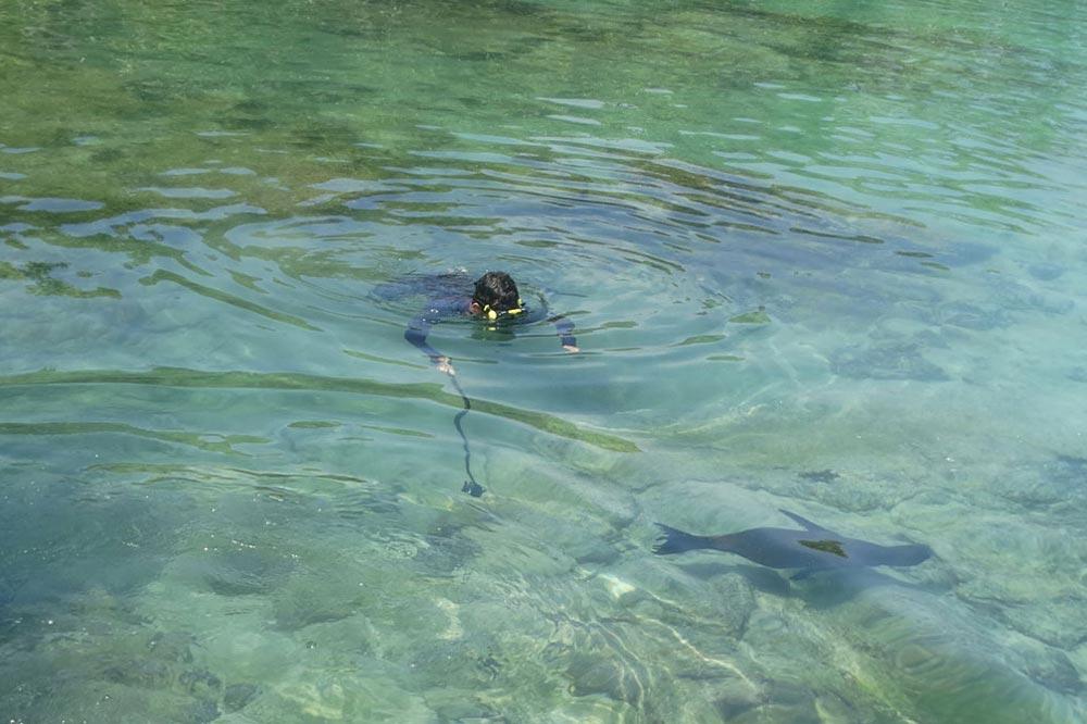 شنا با شیر دریایی