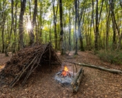 بقا در جنگل